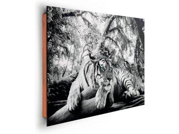 Bild Tigerblick II