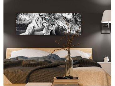 Bild Tigerblick I