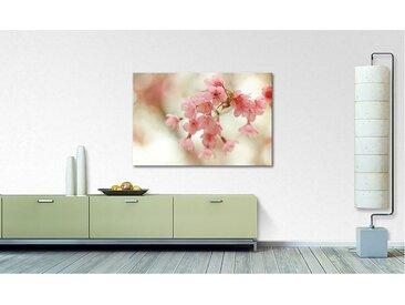 Leinwandbild Cherry Blossoms