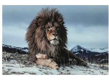 KARE Glasbild 120 x 180 cm Proud Lion /Bunt, Glas