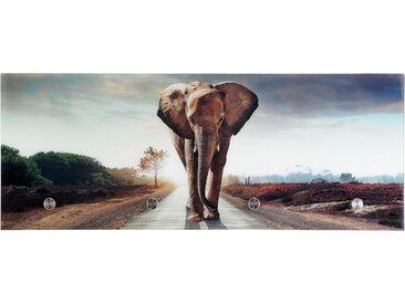 BOXXX Glasgarderobe 30x80 Elefant TOBI, Mehrfarbig, Glas