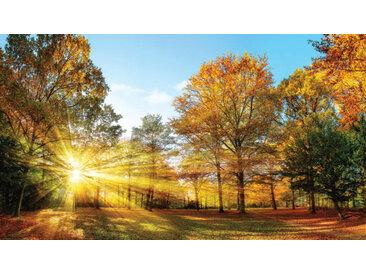 Euroart Acrylbild Sunny Autumn I 100x180 cm, Mehrfarbig, Acryl