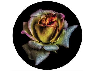 Euroart Glasbild Dark Flowers X 50x50, Mehrfarbig, Glas