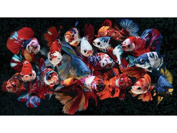 Euroart Acrylbild Koi 100x180 cm, Mehrfarbig, Acryl