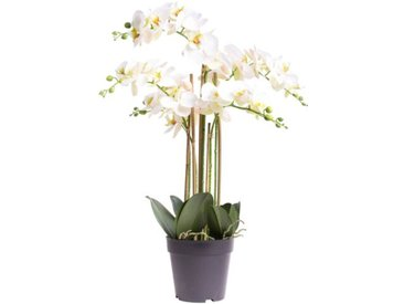 Kunstblume Orchidee in Topf Bora