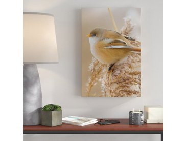 Leinwandbild Vogel sitzt auf Ähre