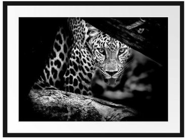 Gerahmtes Poster Neugieriger Gepard