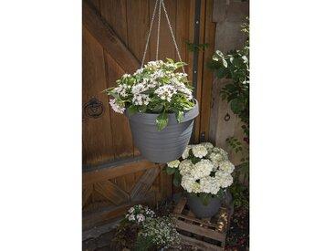 Blumenampel Country Star aus Kunststoff