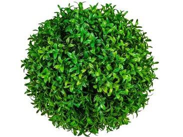 Tischpflanze Buchsbaum