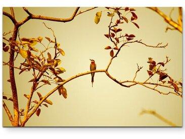 Leinwandbild Vogel auf einem Ast bei Sonnenuntergang