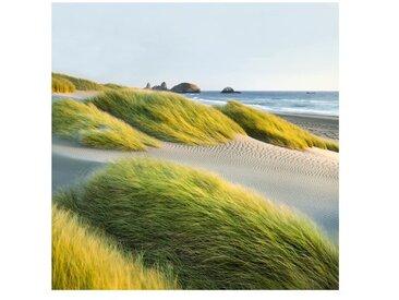 Matt Fototapete Dünen und Gräser am Meer 1,92 m x 192 cm