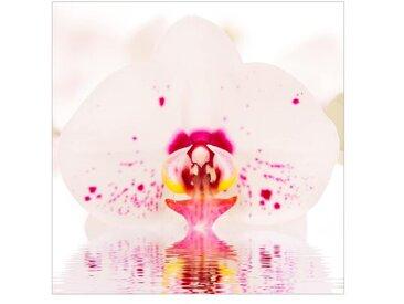 Matt Fototapete Gepunktete Orchidee auf Wasser 1,92 m x 192 cm