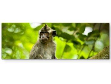 Leinwandbild Affe im natürlichen Lebensraum