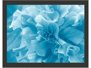 Fototapete Blue azalea 154 cm x 200 cm