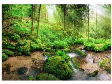 Glatte Fototapete Humid Forest