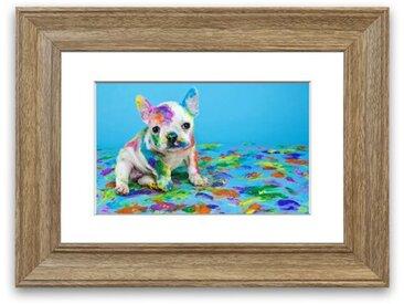 Gerahmtes Poster Malparty Französische Bulldogge