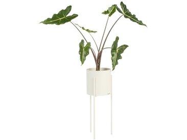 Blumentopf Metall Beige | Pflanzkästen | Pflanzenkübel | Blumenständer