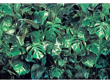 Komar Foto-Tapete »Verdure«, glatt, bedruckt, Wald, geblümt, (Set), ausgezeichnet lichtbeständig