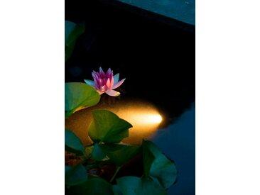 Teichleuchte »AquaSpotlight 60«, Ubbink, weiß