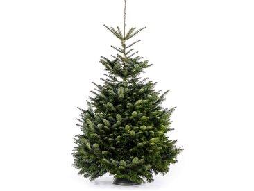 toom Fair Trees® Weihnachtsbaum Nordmanntanne gesägt 150-190 cm