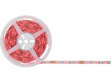 Paulmann LED-Streifen-Komplettset 'SimpLED' mehrfarbig 5 m 505 lm 24 W mit Stecker