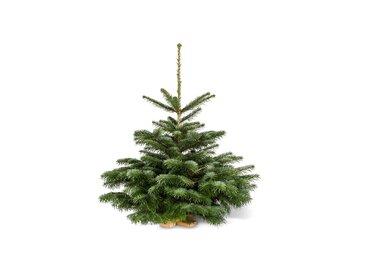 toom Fair Trees® Weihnachtsbaum Nordmanntanne auf Holzkreuz 80-100 cm