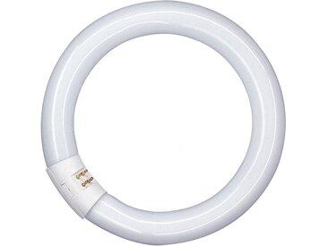 Osram Leuchtstofflampe Ringform T9 G10Q / 40 W (3200 lm) Kaltweiß EEK: A