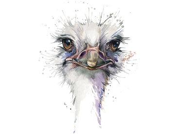 queence Leinwandbild Vogelstrauss 80x120 cm bunt Leinwandbilder Bilder Bilderrahmen Wohnaccessoires