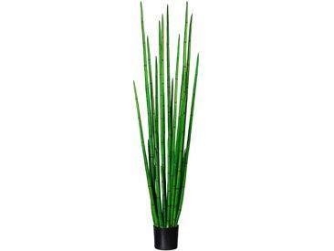 Creativ green Künstliche Zimmerpflanze Sanseveria cylindrica (1 Stück) H: 185 cm grün Zimmerpflanzen Kunstpflanzen Wohnaccessoires