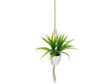 I.GE.A. Kunstpflanze Dracena, in Hängeampel B/H: 43 cm x 35 grün Künstliche Zimmerpflanzen Kunstpflanzen Wohnaccessoires