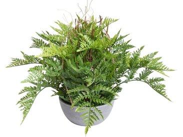 Botanic-Haus Künstliche Zimmerpflanze Farn Hängeampel Ø 47 cm grün Zimmerpflanzen Kunstpflanzen Wohnaccessoires