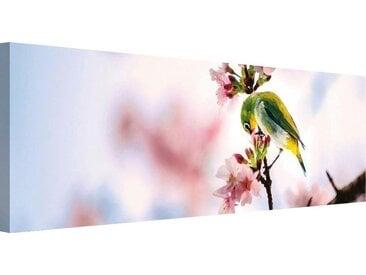 Premium collection by Home affaire Leinwandbild Vogel auf dem...
