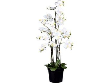 Creativ green Kunstorchidee Phalaenopsis H: 130 cm weiß Künstliche Zimmerpflanzen Kunstpflanzen Wohnaccessoires
