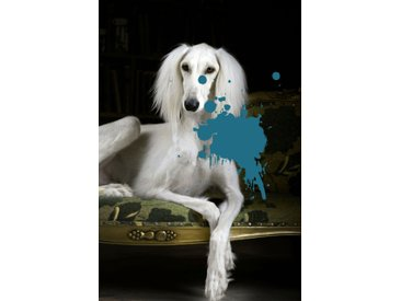 queence Acrylglasbild Hund B/H/T: 80 cm x 120 2,4 blau Acrylglasbilder Bilder Bilderrahmen Wohnaccessoires