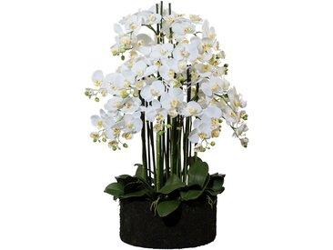 Creativ green Kunstorchidee Phalaenopsis (1 Stück) H: 93 cm weiß Kunstorchideen Kunstpflanzen Wohnaccessoires