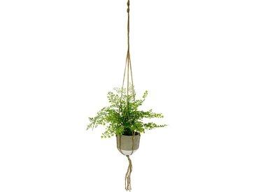 I.GE.A. Kunstpflanze Frauenhaar, in Hängeampel B/H: 42 cm x 40 grün Künstliche Zimmerpflanzen Kunstpflanzen Wohnaccessoires