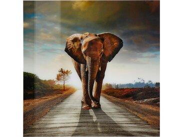 Home affaire Acrylglasbild Elefant, 100/100 cm B/H: 100 x bunt Acrylglasbilder Bilder Bilderrahmen Wohnaccessoires