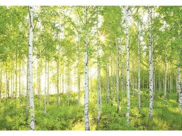 XXXLutz VLIESTAPETE , Mehrfarbig, Weiß, Papier, Bäume, 368x248 cm
