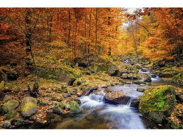 Wiedemann BILD Landschaft & Beige, Herbst , Mehrfarbig, Metall, Kunststoff, 120x80 cm