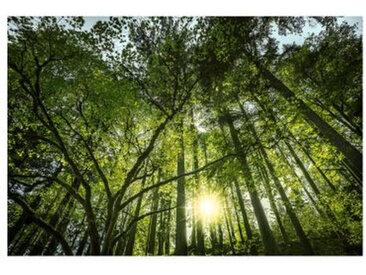 Monee GLASBILD Bäume , Mehrfarbig, Glas, 120x80 cm