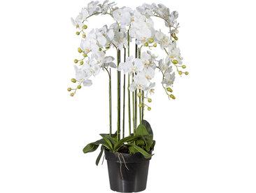 XXXLutz KUNSTBLUME Orchidee , Weiß, Kunststoff, 110 cm