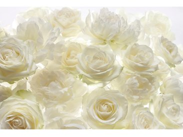Komar VLIESTAPETE Shalimar , Weiß, Gelb, Papier, Rose, 368x248 cm