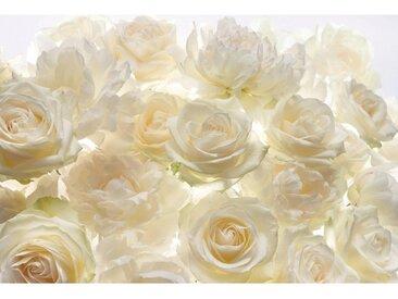 XXXLutz VLIESTAPETE , Gelb, Papier, Rose, 368x248xcm cm