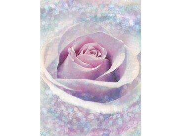 XXXLutz VLIESTAPETE , Rosa, Rosa, Papier, Rose, 184x248xcm cm