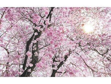 XXXLutz VLIESTAPETE , Blume, 400x250 cm
