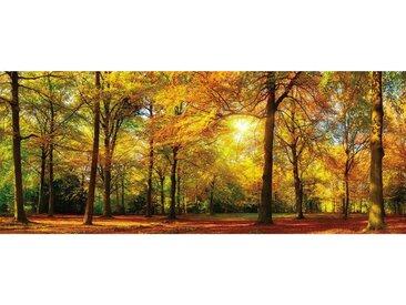 XXXLutz GLASBILD Landschaft & Beige , Mehrfarbig, Glas, 50x125 cm