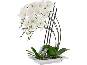 Ambia Home KUNSTPFLANZE Orchidee , Weiß, Keramik, 62 cm