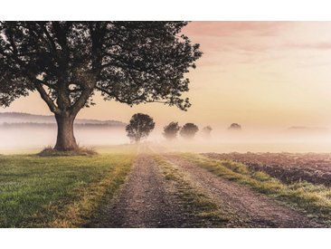 XXXLutz VLIESTAPETE , Bäume, 400x250xcm cm