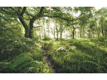 XXXLutz VLIESTAPETE , Bäume, 400x250 cm
