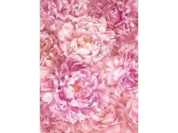 XXXLutz VLIESTAPETE , Rosa, Rosa, Papier, Blume, 184x248 cm